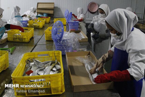 بهرهبرداری از ۱۲ پروژه عمرانی و خدماتی در بندرلنگه