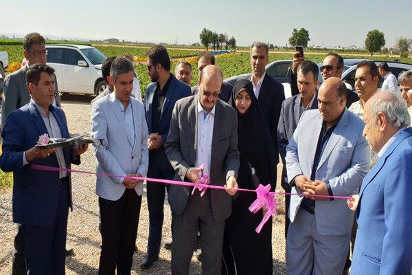 یک واحد پرورش گاو شیری در شهرستان قزوین افتتاح شد