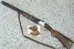 دستگیری ۲ شکارچی متخلف در دامغان/ کشف لاشه ۲ قطعه تیهو