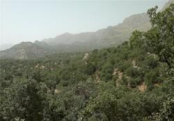 اراضی ملی شمیرانات زیر ذره بین نیروهای حفاظتی است