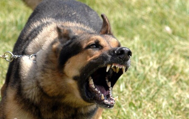 حمله خونین ۲ سگ ولگرد به دختر بچه ۷ ساله خرمشهری