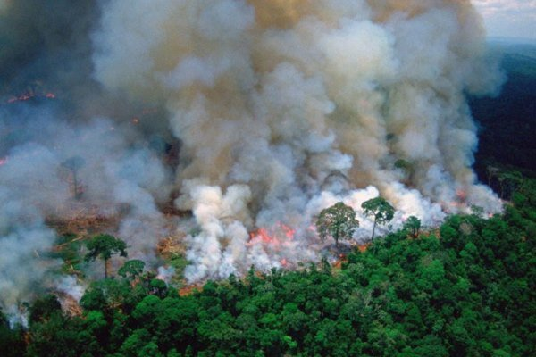Brezilya, Amazonlar'daki yangınlar için yapılan yardımı reddetti