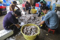 دەستپێکی وەرزی ڕاوە ماسی لە هۆنگ کۆنگ