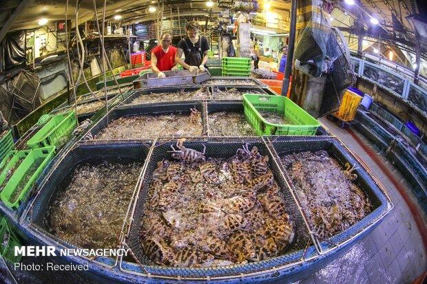 پایان فصل ممنوعیت صید در هنگ کنگ