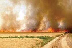سالانه ۳۰ هزار هکتار زمین کشاورزی در شوشتر به آتش کشیده میشود