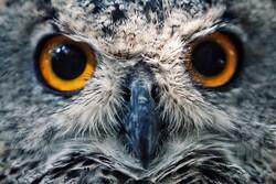 ہمدان میں زخمی پرندوں کی حفاظت کا مرکز