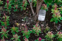 خسارت دیدگان رسته گل و گیاه زینتی تسهیلات دریافت میکنند