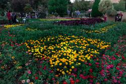تولید سالانه۵۰۰ میلیون شاخه گل و گیاه در مازندران