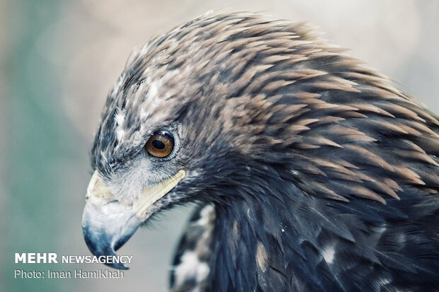 Hospice for injured birds of prey