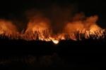 مراتع شهرستان طارم باردیگر آتش گرفت