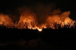 شعلههای حریق جنگلهای بخش الوار گرمسیری اندیمشک مهار شد
