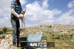 اسرائیلی حکومت نے فلسطینیوں کا پانی چوری کرکے ان کی زراعت کو تباہ کردیا