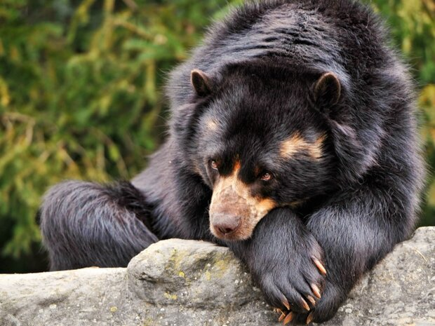 Bear cubs shot dead in southwestern Iran