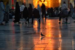 "مراسم ""صلات"" في مرقد علي ابن موسى الرضا (ع) / صور"