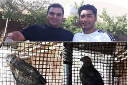 تحویل یک بهله پرنده شکاری به اداره محیط زیست دماوند