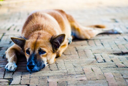 Special working groups to be formed on stray dog population control