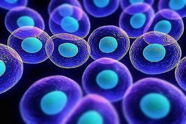 Iran moves up 17 steps in producing science of stem cells in ME region