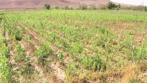 افزایش ۲۰۰ درصدی تولید نهال در شهرستان مهران طی سال ۹۸