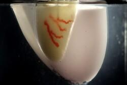 رگهای خونی در بافتهای زنده چاپ شد