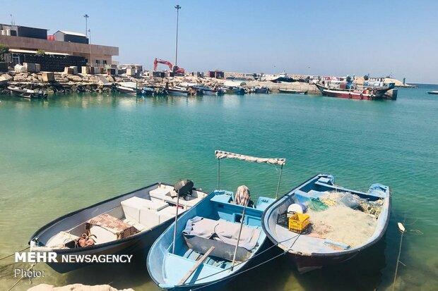 تشکیل یگان های حفاظت در فصل صید میگو در خلیج فارس