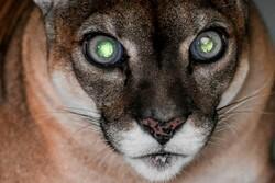 صور منتقاة من عالم الحيوان / صور