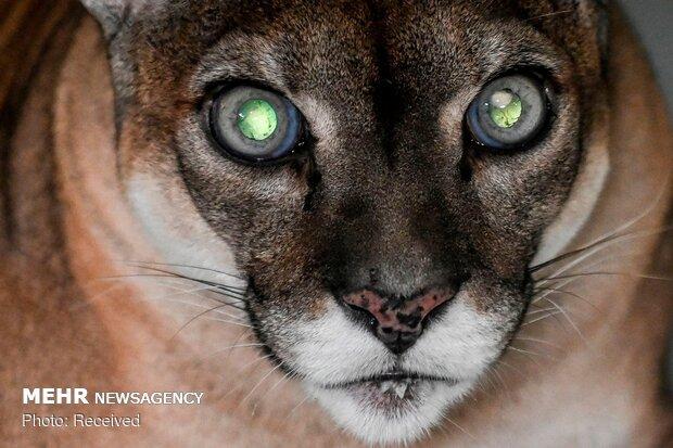 الصور المنتخبة من عالم الحيوان