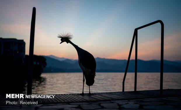 الصور المنتخبة من عالم الحيوانه