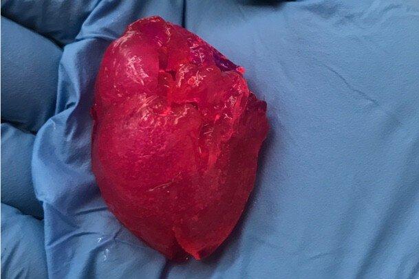 قلب مینیاتوری با پرینتر زیستی تولید شد