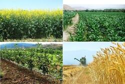 افزایش ۳۰هزار هکتاری سطح زیر کشت محصولات زراعی درسیستان وبلوچستان