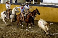 Meksika'daki boğa güreşi festivalinden fotoğraflar