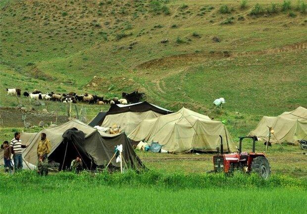 ۴۰ درصد مراتع استان بوشهر در اختیار عشایر است
