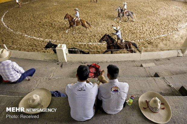 مراسم گاوبازی در روز ملی مکزیک