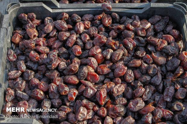 توانمندیهای استان بوشهر در تولید و صادرات خرما معرفی میشود