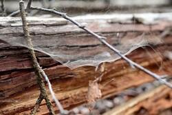 جایگزین پلاستیک از تار عنکبوت و الیاف چوب تولید شد