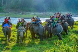 """Elephant Safari"""
