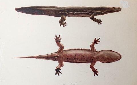 بزرگترین دو زیست در جهان، پس از مرگ کشف شد