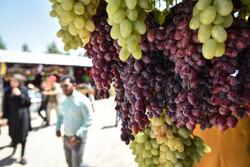 نهمین جشنواره انگور روستای هزاوه اراک برپا شد