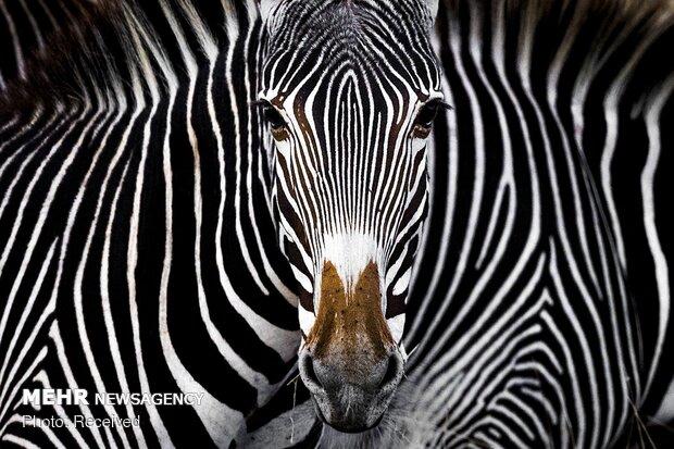برندگان مسابقه عکاسی حفاظت از طبیعت