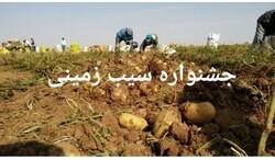 جشنواره استانی سیب زمینی در قروه برگزار می شود