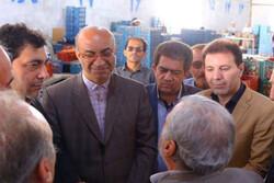 ۳۰۰ هزار تن گوجه فرنگی از مزارع استان قزوین برداشت شد