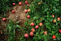 الزام نصب کنتور هوشمند بر چاههای کشاورزی