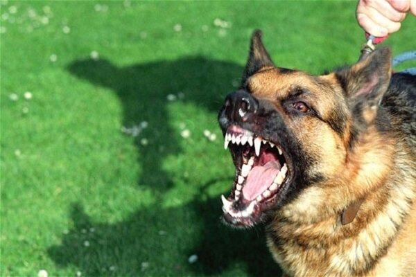 سیالکوٹ میں پاگل کتے نے 23 افراد کو کاٹ لیا