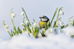 زمستان گذرانی را برای گونههای جانوری آسان کنیم
