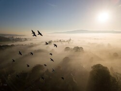 مسابقة تصوير عالم الحيوان في بريطانيا  /صور