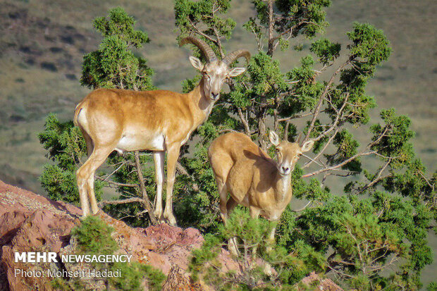 Iran's Golestan National Park