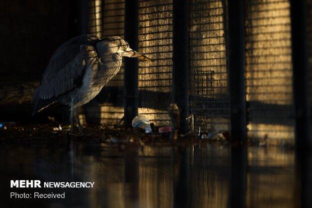 مسابقة تصوير عالم الحيوان في بريطانيا