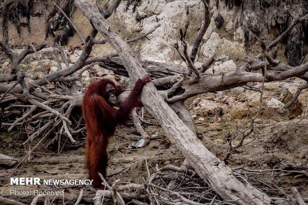 آلودگی ناشی از آتش سوزی در اندونزی