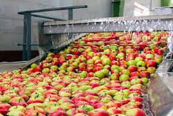 کمبود صنایع تبدیلی ازمشکلات بخش کشاورزی در کهگیلویه و بویراحمداست