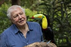 دیوید آتنبورو به سراغ رنگ در حیات وحش میرود