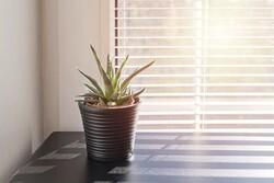 گلدان هوشمند از ساکنان خانه مراقبت می کند